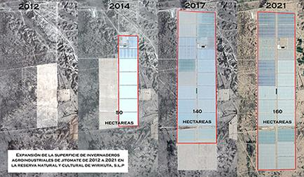 Diagram showing the expansion of greenhouses in Wirikuta between 2012 - 2021