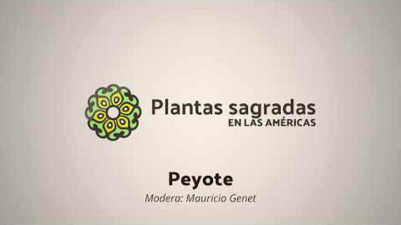 Politics and Conservation Around Peyote   Plantas Sagradas en las Américas