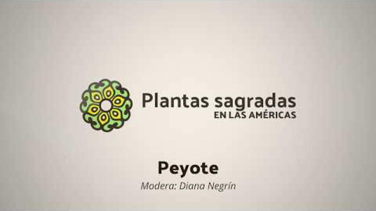 Peyote: Territory, Roots and Conflict   Plantas Sagradas en las Américas